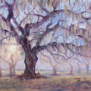 Dawn Oak