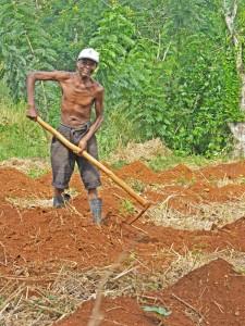 Haiti farmer